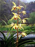 木纹皮草荷型花-4