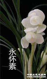 莲瓣铭品,永怀素。品种保证。