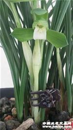 立叶荷素,前垄子母2苗带芽