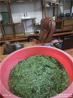 高山龙井(绿茶)6.15采摘