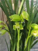 春剑玉堂春隔代子母还有2小芽